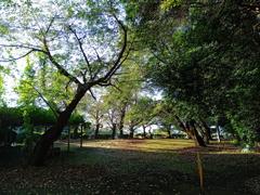 2020/09/08_氷川児童公園