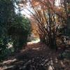 2019/12/12_木漏れ日と紅葉の奥の日差し