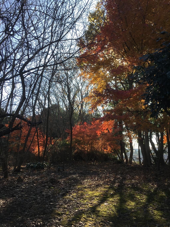 2019/12/12_木漏れ日と紅葉