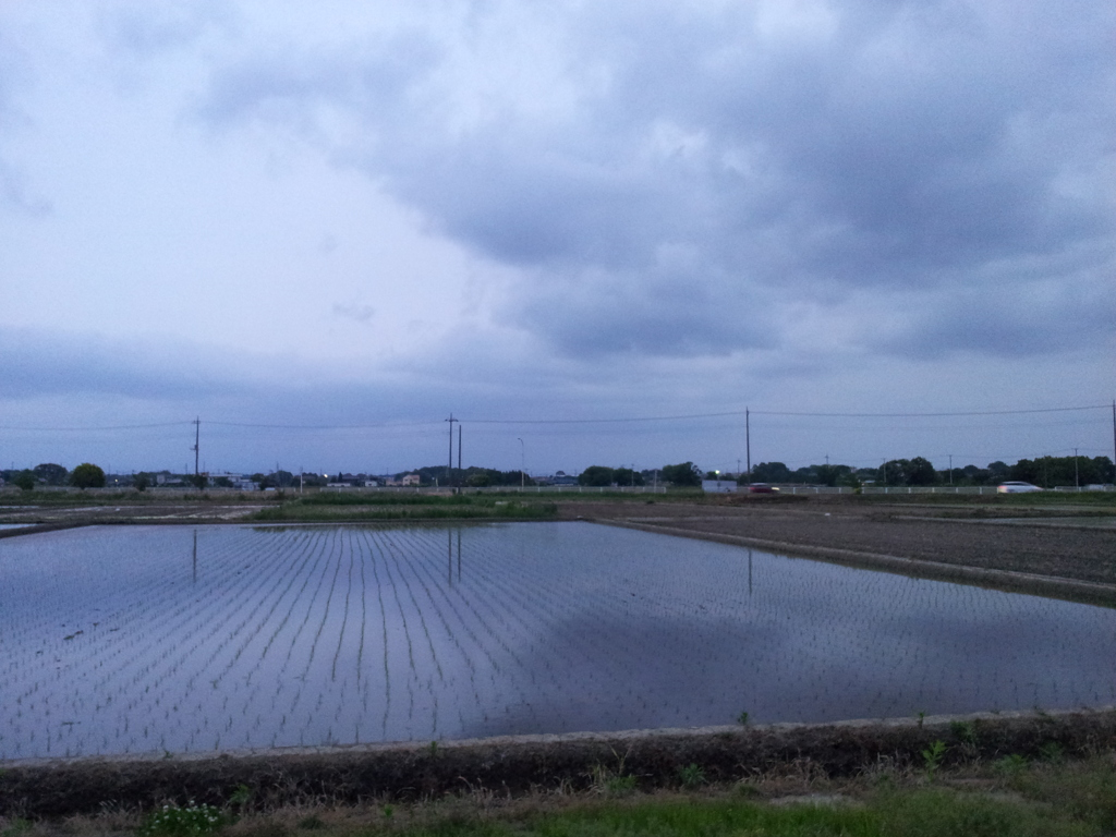 2019/05/18_水田に曇天
