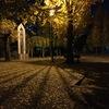 2019/12/08_夜の公園の銀杏