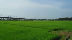 2012/07/29_田園