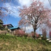 2020/04/05_花桃の郷