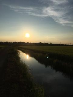 2020/08/29_用水路に西日