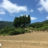 2020/06/08_大通領神社