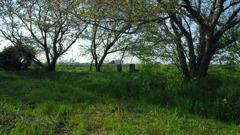 2013/04/13_生茂る叢の中の石碑