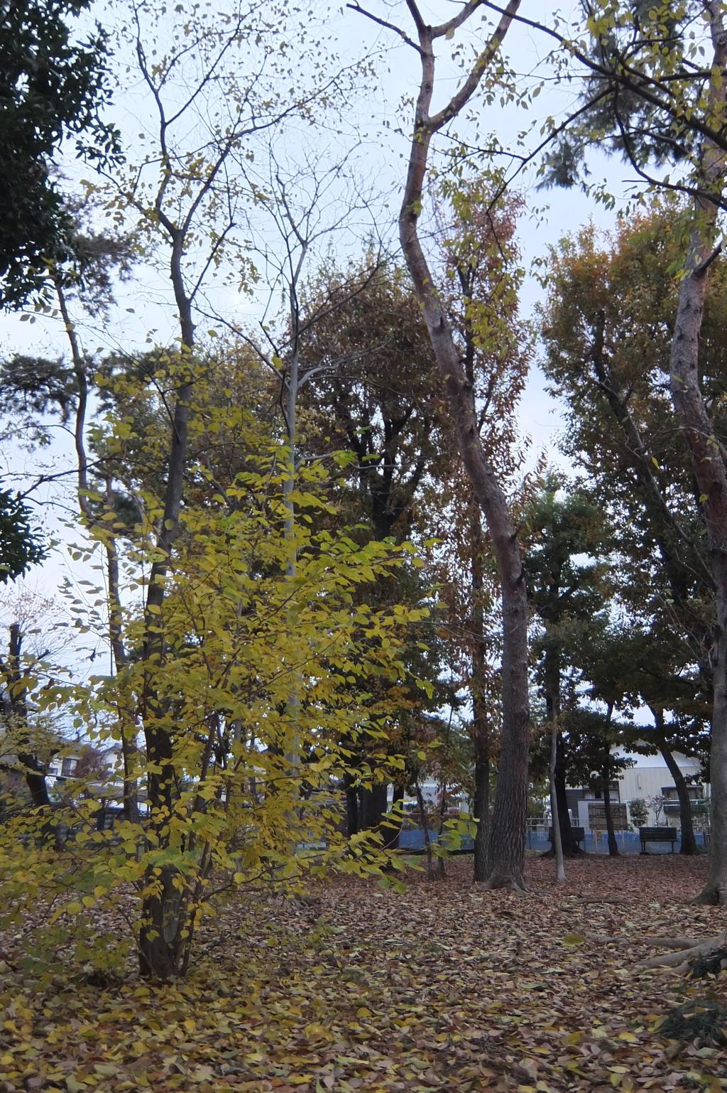 2014/11/30_ふれあいの森801