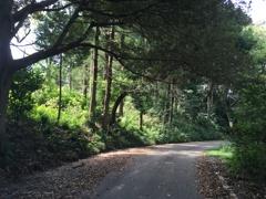 2020/09/22_木漏れ日の道