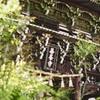 新緑の善峯寺