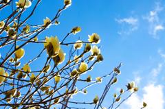 春待ち日和
