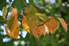 少しずつ秋の気配