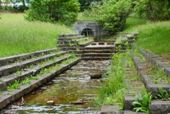 緑地の小川