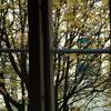 窓から感じる秋