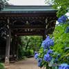 千葉県のあじさい寺 本土寺