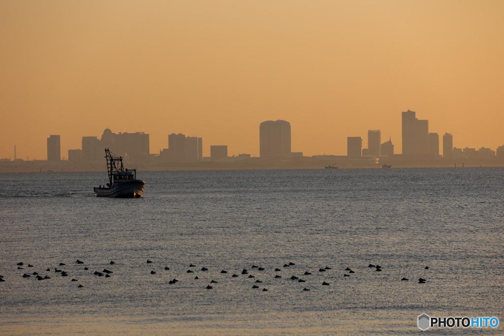 東京湾浦安沖の朝景 行く船とカモの群れ