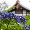 千葉県のあじさい寺 本土寺2