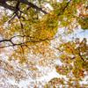 華やぐ木の葉たち 2