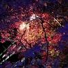 都心の紅葉 夜見ると光が複雑で、不思議きれい