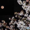 桜咲く夜のスーパームーン PSバージョン
