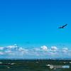 強風の東京湾 抗い飛ぶウミネコの若鳥