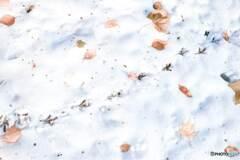 鳥さんの足跡