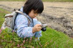 野の草花を撮る