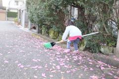 山茶花のお掃除