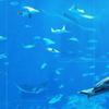 美ら海水族館3