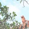 沖縄の空6