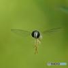 庭の昆虫さん.3