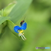 花と昆虫さん