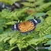 庭にいた蝶