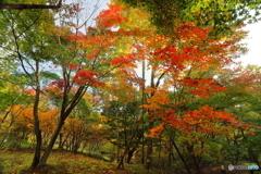 色づく樹々
