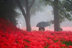 赤い華と雨