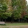 秋の訪れ 草紅葉