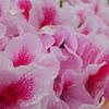 雨上がりの花達(4)