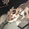丹波竜の里 恐竜化石