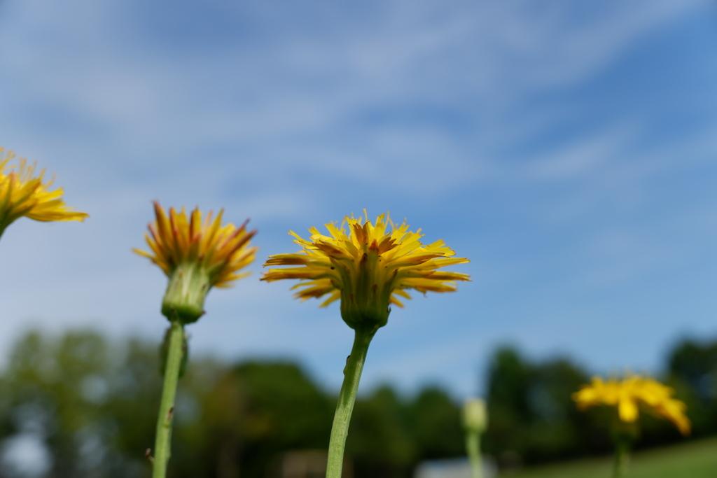 夏の空と花