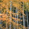 ●秋景色●