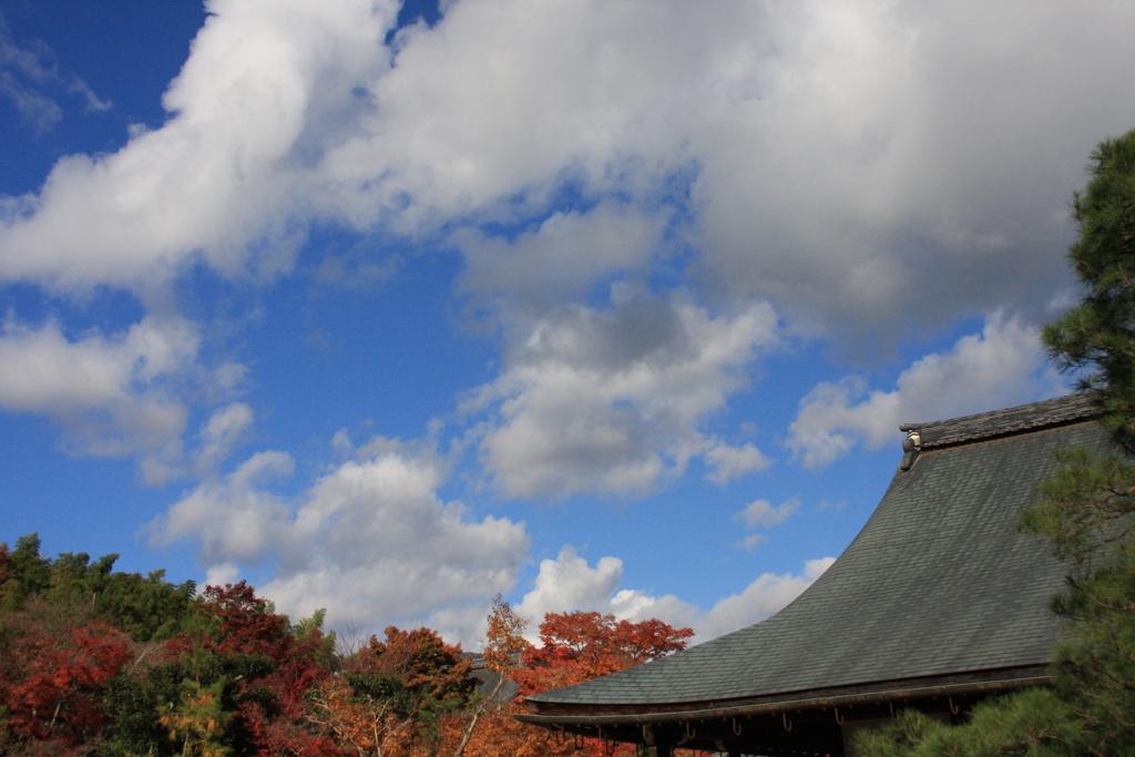 秋  景  色