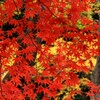 ●秋  景  色●