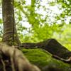 木の根っこと木漏れ日