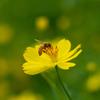 花に誘われる虫たち2