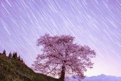 桜と星の軌跡