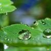 草花と水 その16