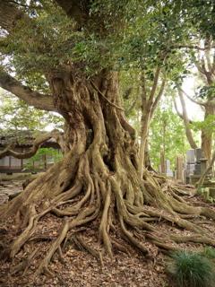 七尾・山の寺寺院群 その19