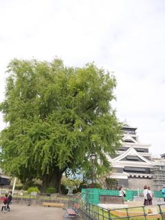 熊本城 その21