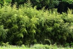 森の力 IMG_3