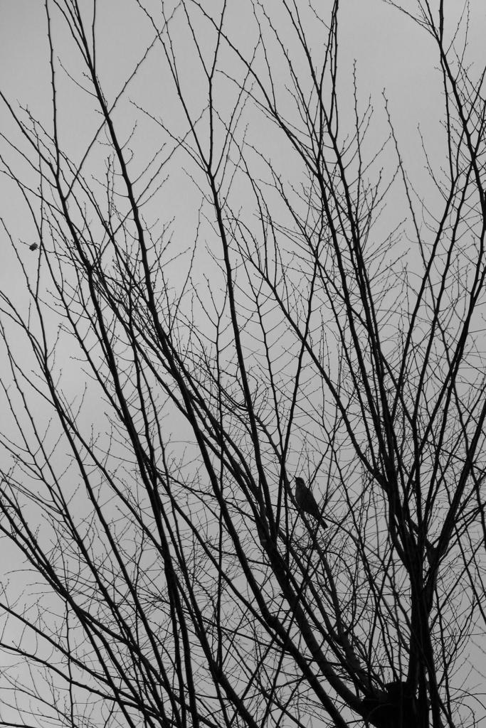 春を待つ IMG_1