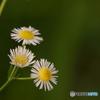 野辺に咲く花